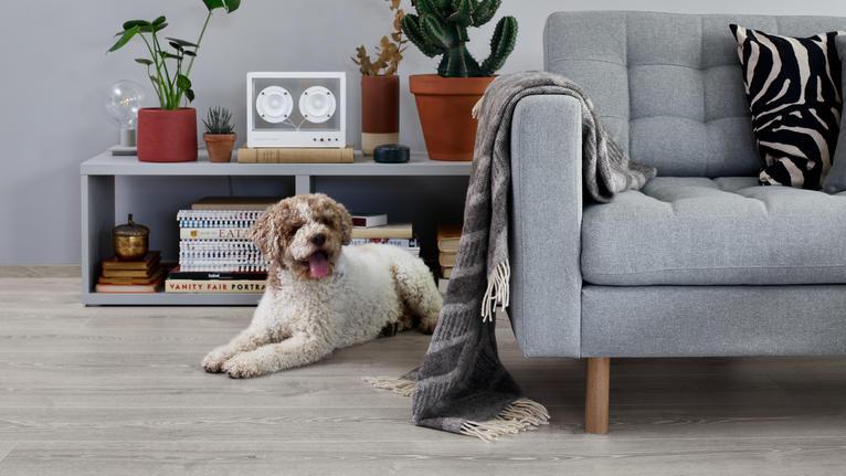Mikä lattia sopii koiraperheeseen?