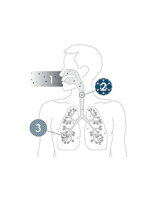 How do particulate matters enter the body?